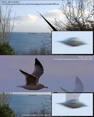 Photos troublantes ! - Page 2 Cornwallseagullbylouzuc