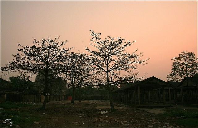 Làng quê Việt Nam đẹp giản dị suốt 4 mùa 35038837