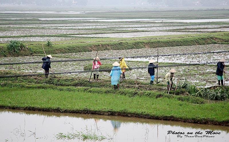 Làng quê Việt Nam đẹp giản dị suốt 4 mùa 20335105