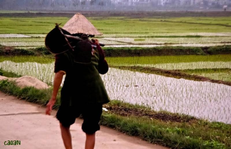 Làng quê Việt Nam đẹp giản dị suốt 4 mùa 38147494