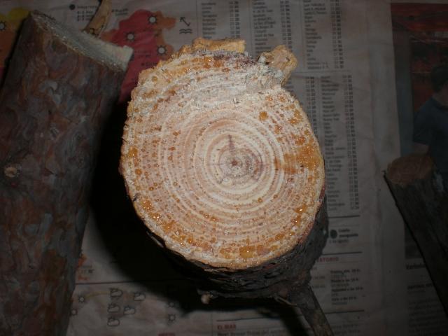 Teas de pino...Comerciales y de PUEPLO... Cimg1751