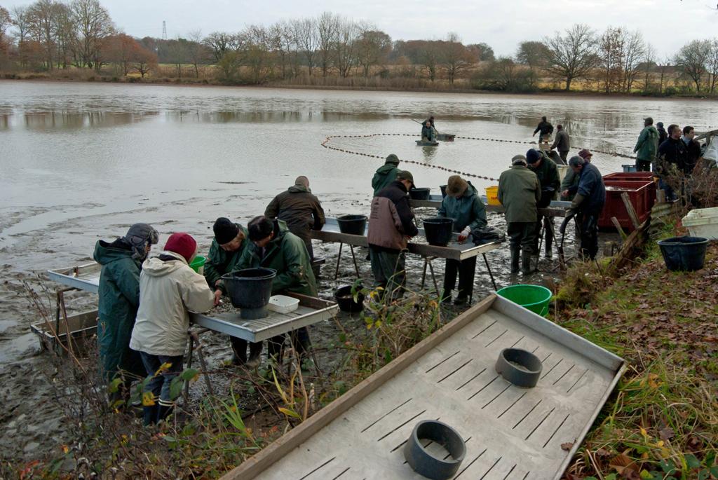 Une pêche d'étang en Sologne N5lOVm
