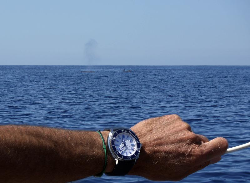 """Dauphins, baleines en Méditéranée et Aquascope """"Black & White"""" TRt0Cb"""