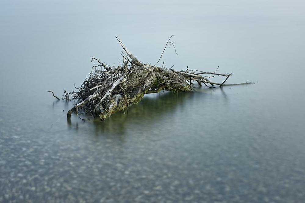 Le tombeau de l'arbre ShHDe4