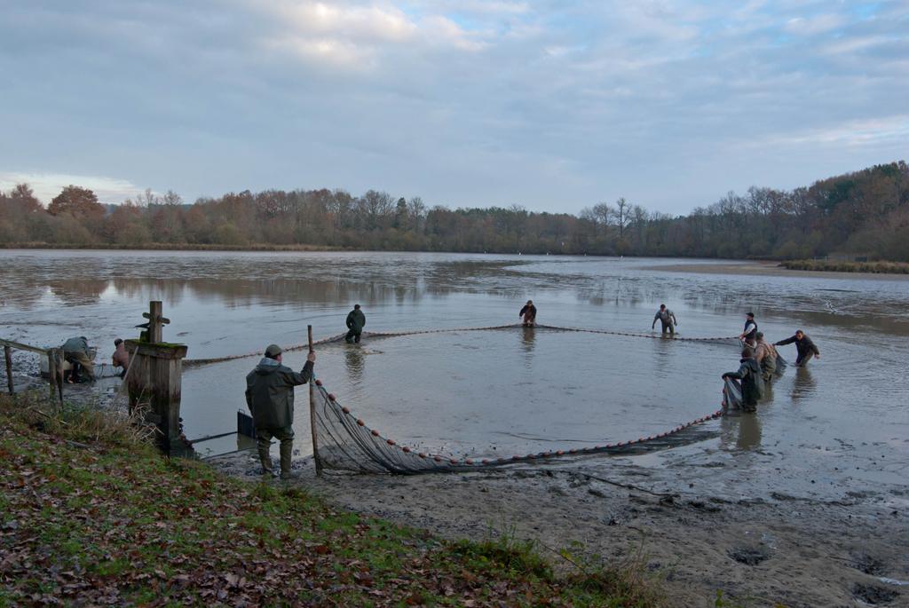 Une pêche d'étang en Sologne ImFCiw