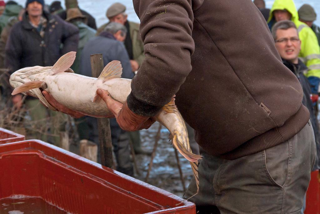Une pêche d'étang en Sologne 04iGrR