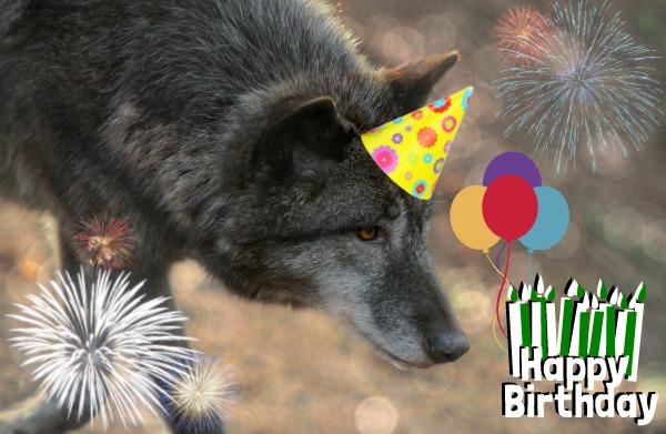 Happy Birthday Breezey! N71HPi