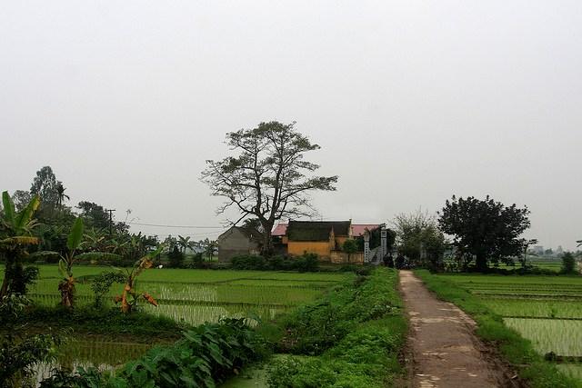 Làng quê Việt Nam đẹp giản dị suốt 4 mùa 92703158