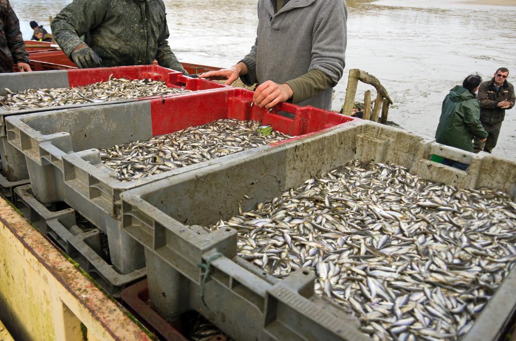 Une pêche d'étang en Sologne SHgpf0