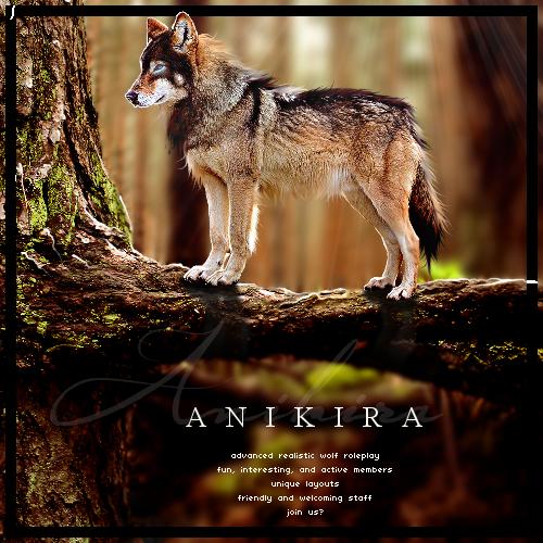 Anikira | Literate Wolf Roleplay LxuAzb