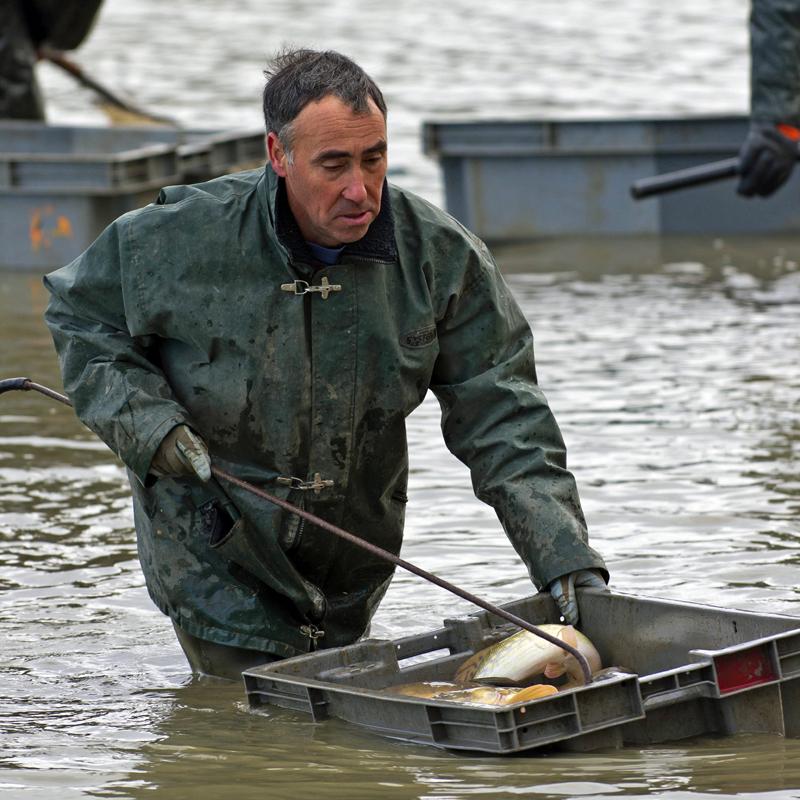 Une pêche d'étang en Sologne Fxjvgz