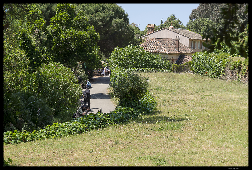 Sortie Anniversaire Toulon - Photos des 5èmes Rencontres Macro du Sud (2015) - Page 21 GyfwUJ
