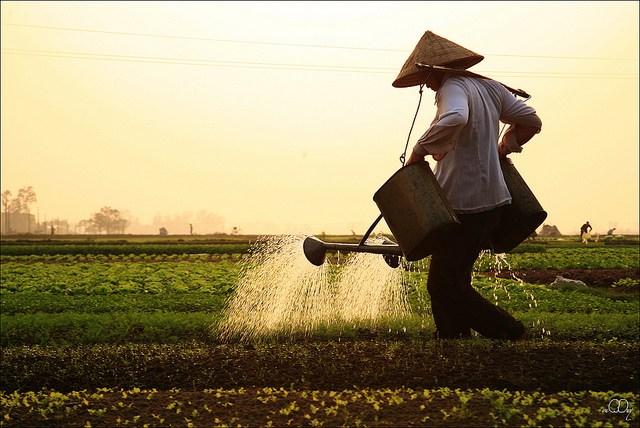 Làng quê Việt Nam đẹp giản dị suốt 4 mùa 84437638