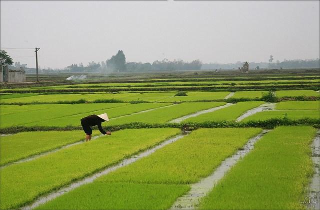 Làng quê Việt Nam đẹp giản dị suốt 4 mùa 74080744