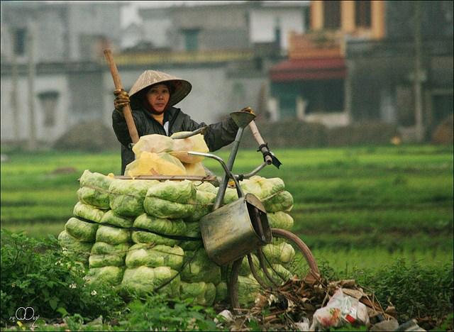 Làng quê Việt Nam đẹp giản dị suốt 4 mùa 14786265