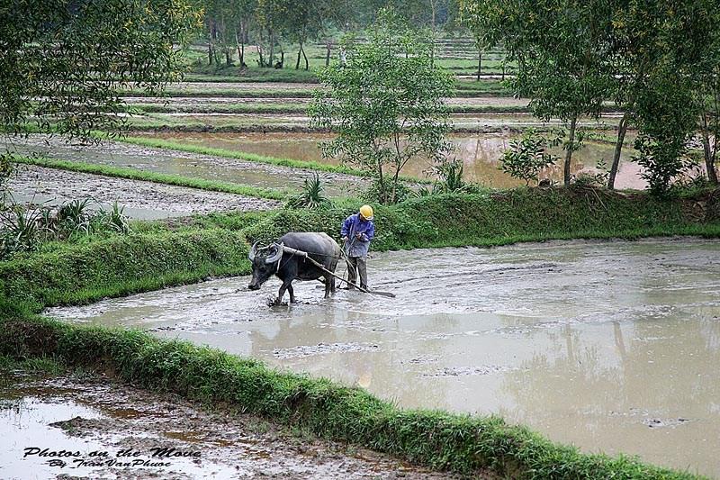 Làng quê Việt Nam đẹp giản dị suốt 4 mùa 83260729