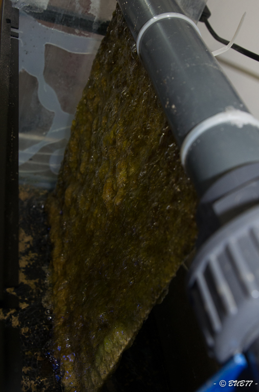 DIY - Fabrication d'un ATS Algae Turf Scrubber E9i1