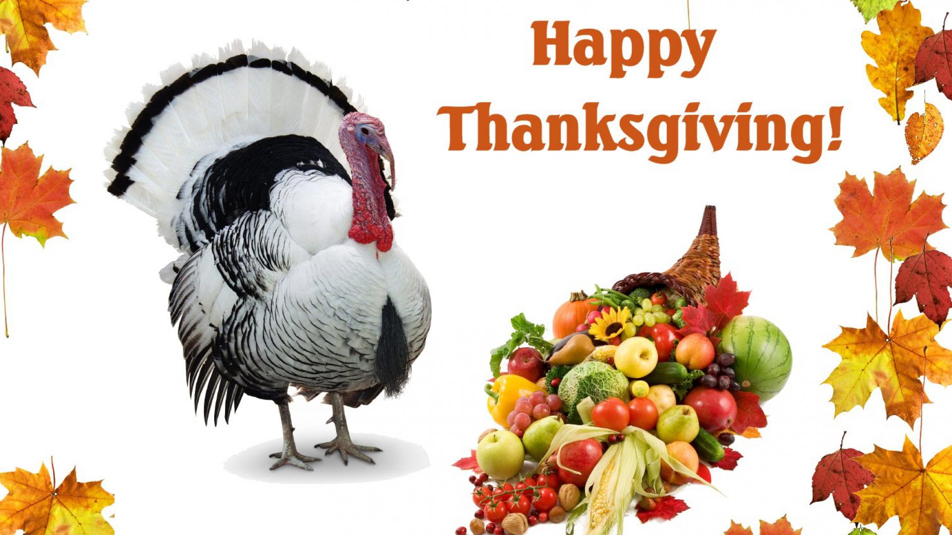 Hình nền Thanksgiving 17533126