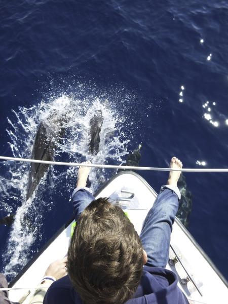 """Dauphins, baleines en Méditéranée et Aquascope """"Black & White"""" Sk4B2X"""