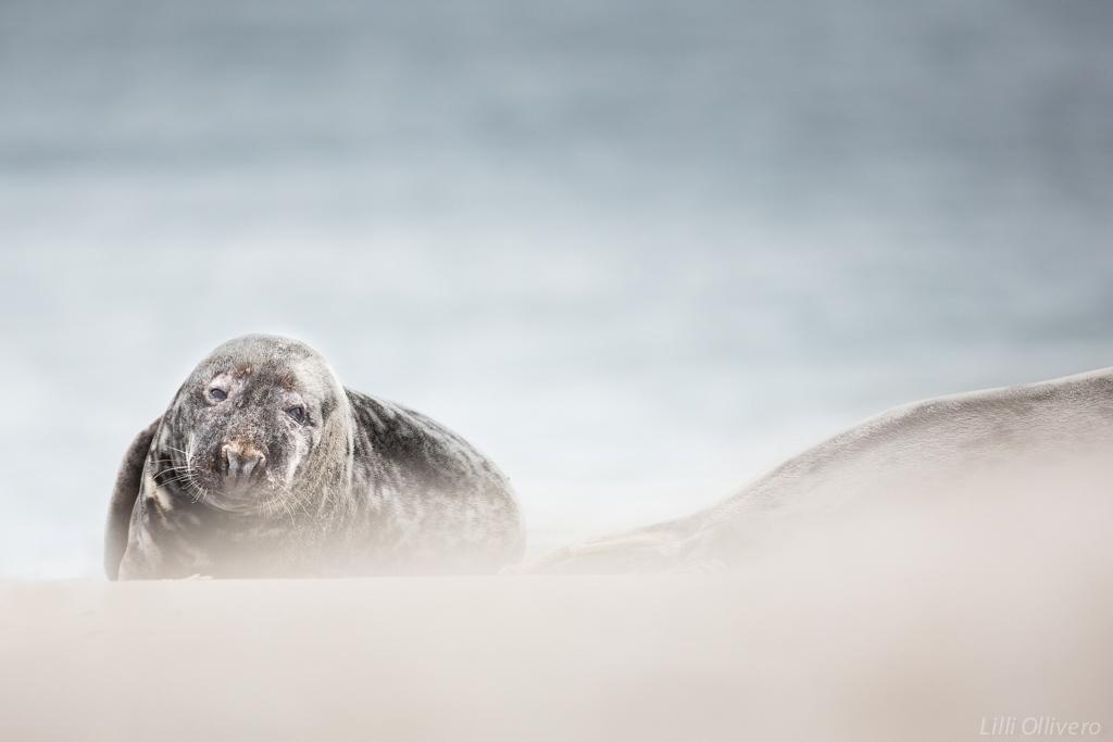 Dans le vent et le sable Wn1PZo