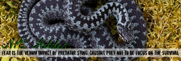 Venomous [NPC Adder/Private] StQui0