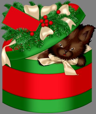 Gatito y Caja DwAhPA