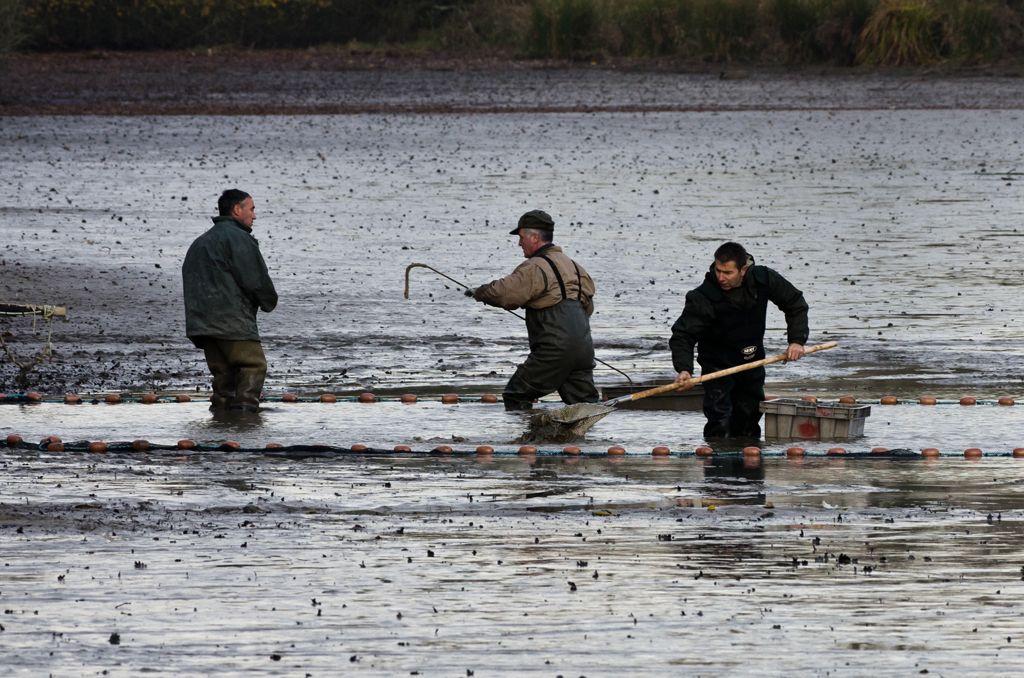 Une pêche d'étang en Sologne EAn0M6