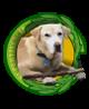 42. Máscotas, animales de rescate y trabajo.