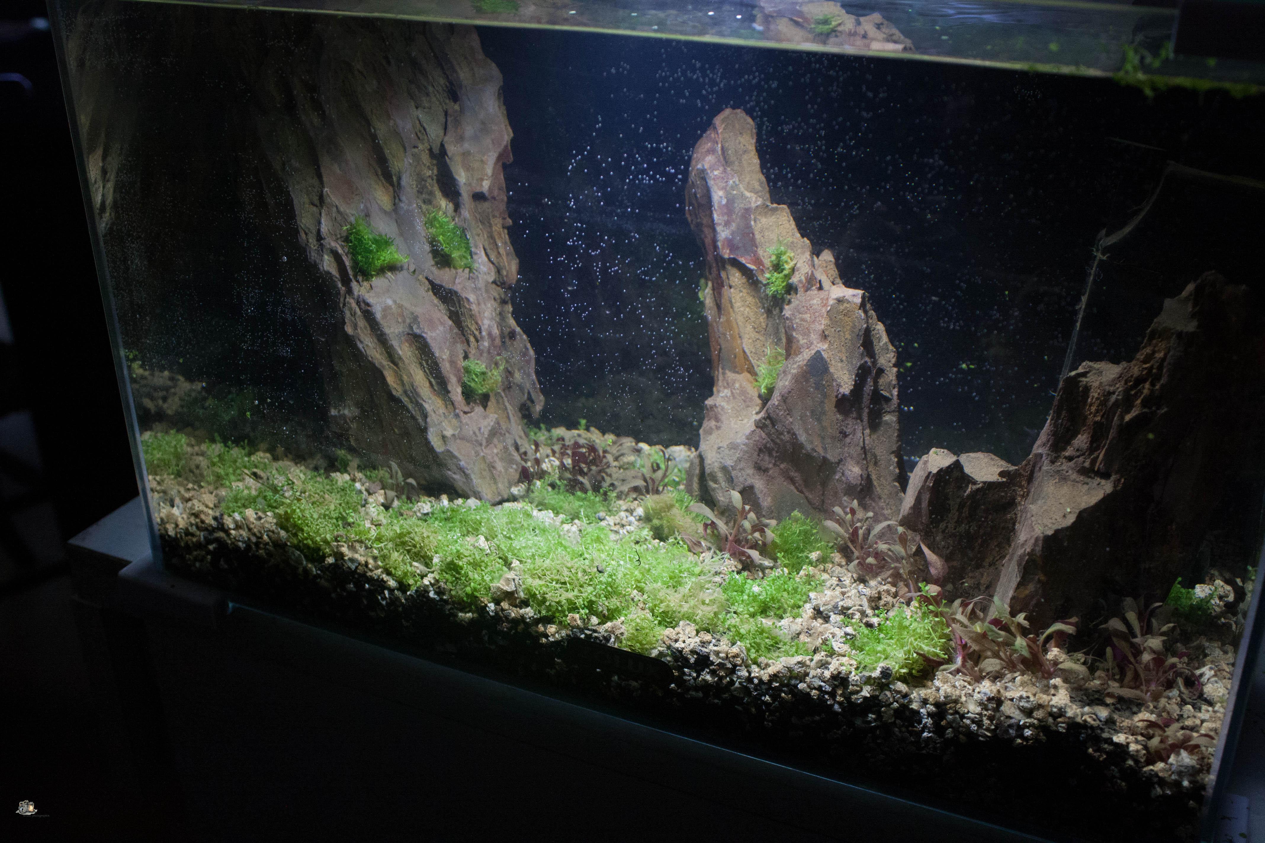 20l aquascaping  ILNUFO