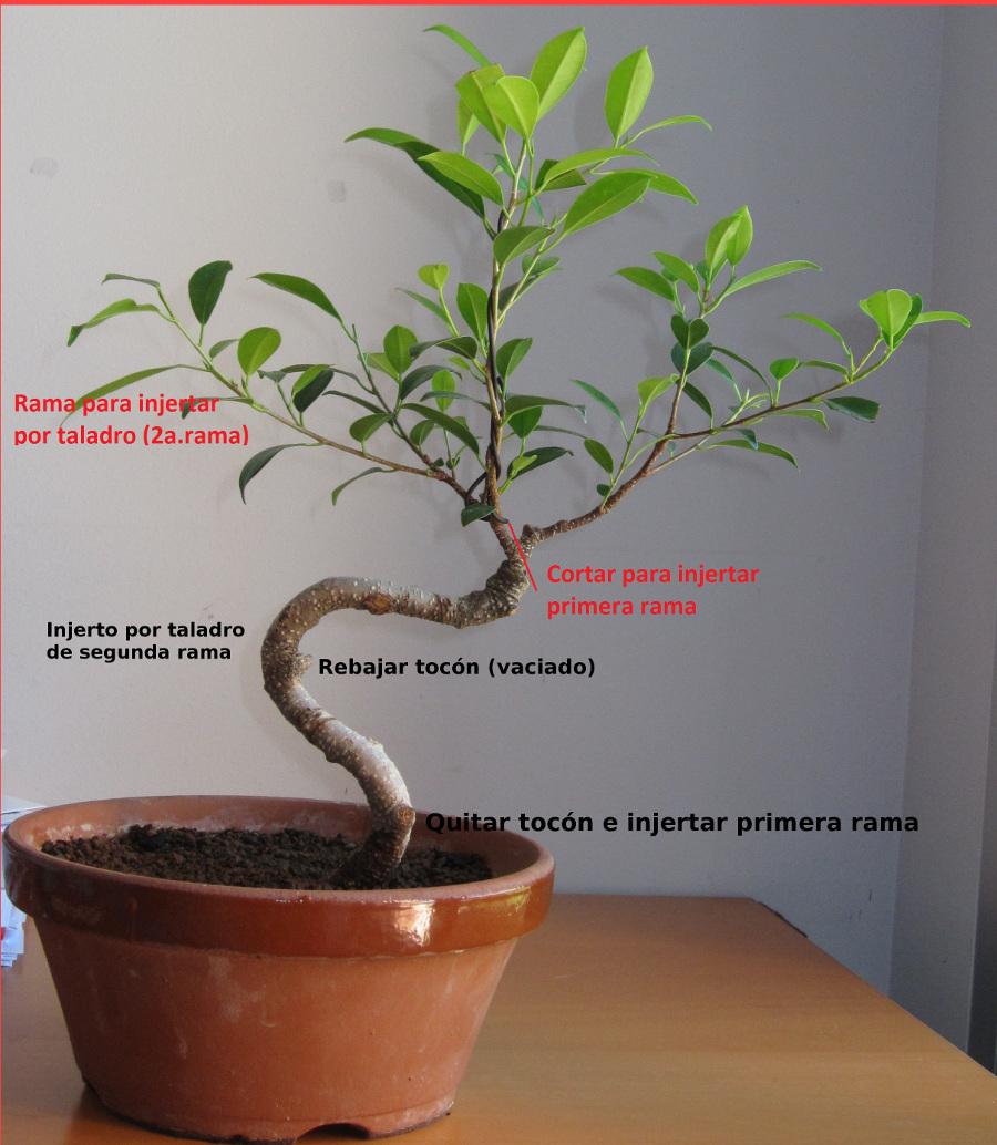 Ayuda con diseño de Ficus  KDQxQH