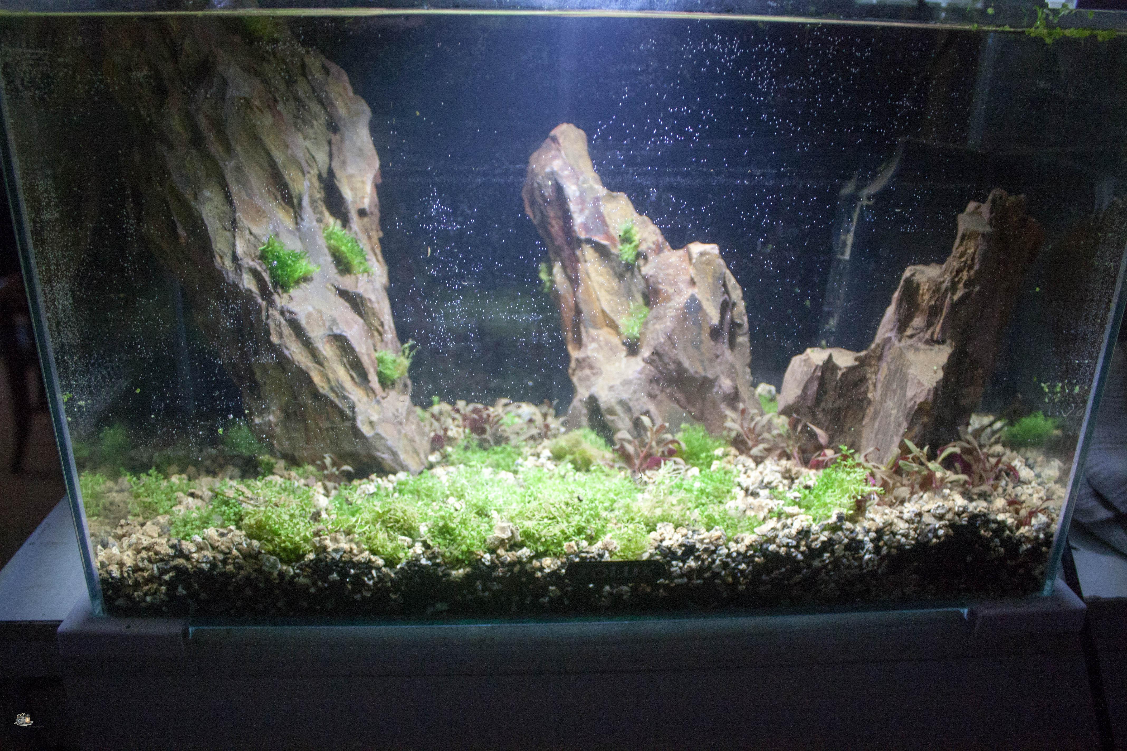 20l aquascaping  W9OFf4