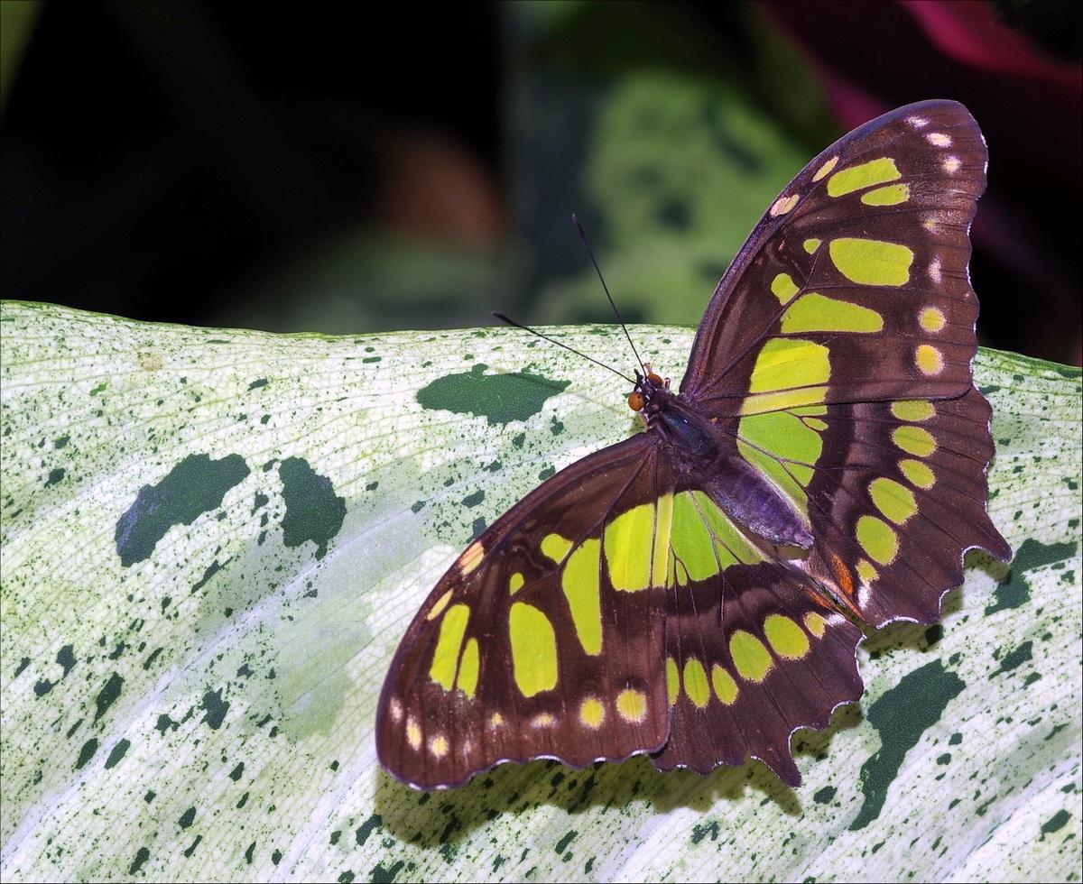 Papillons en Fêtes 2018 AWBdIq