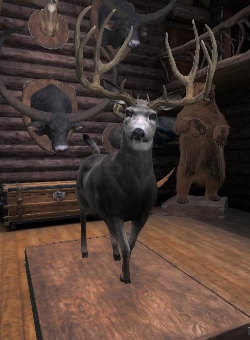 TOP 5 Mule Deer // Ciervo Mula (Typical) 0zZeDP