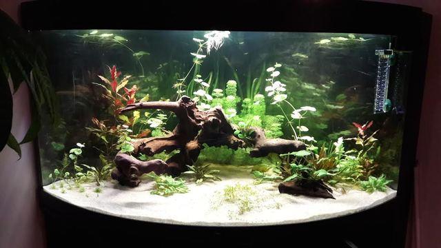 Aquarium Panoramique 350 Litres planté TevPFJ