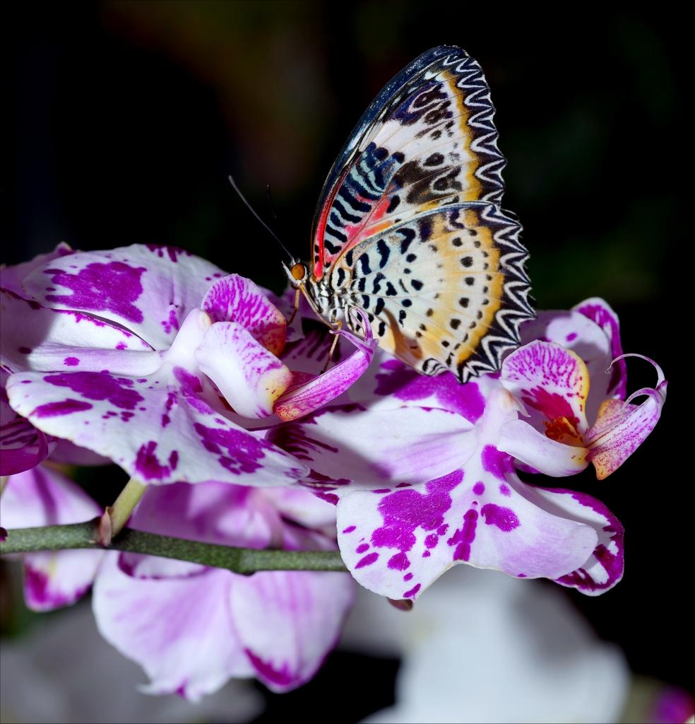 Papillons en Fêtes 2018 Wm85YC