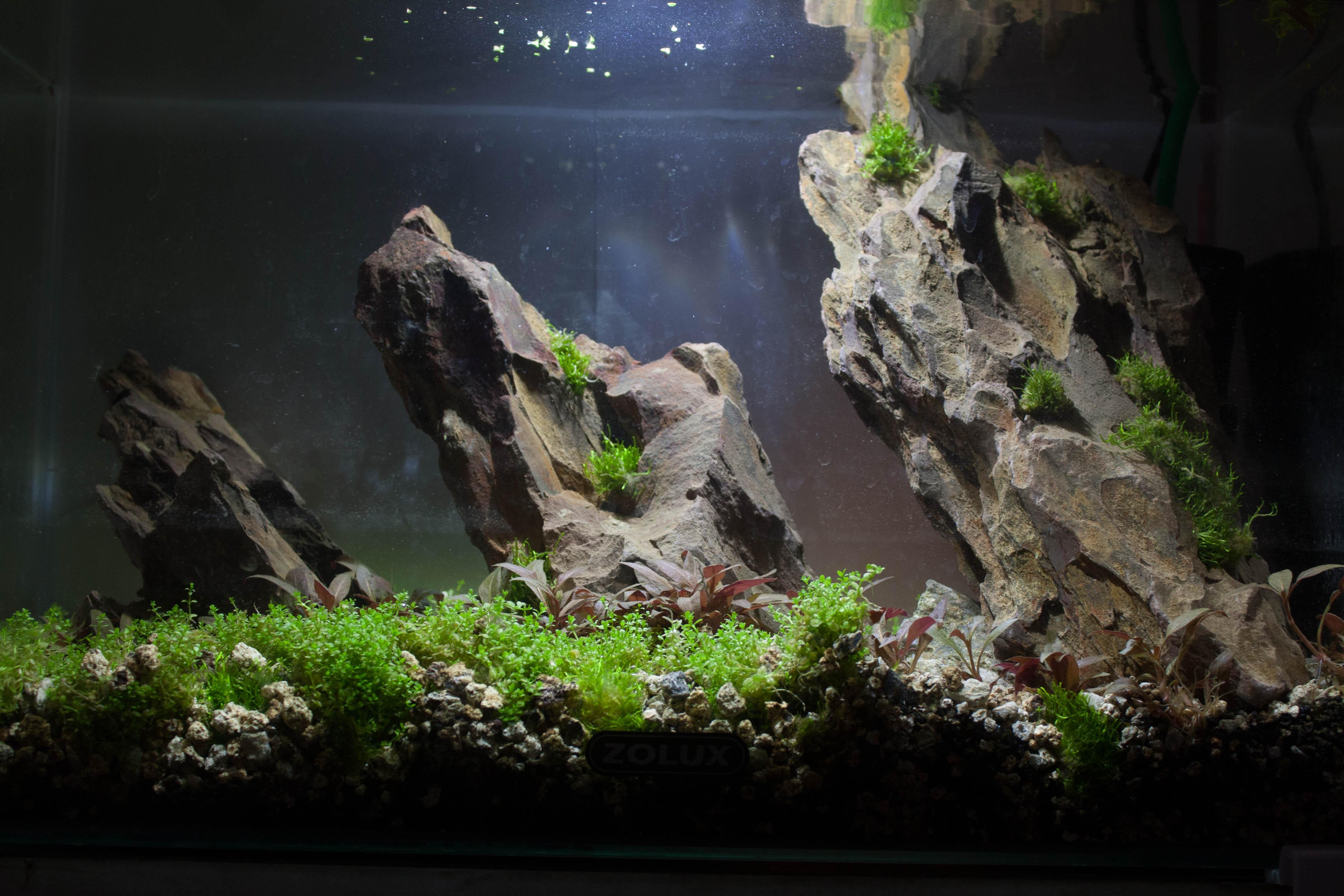 20l aquascaping  PI1SCg