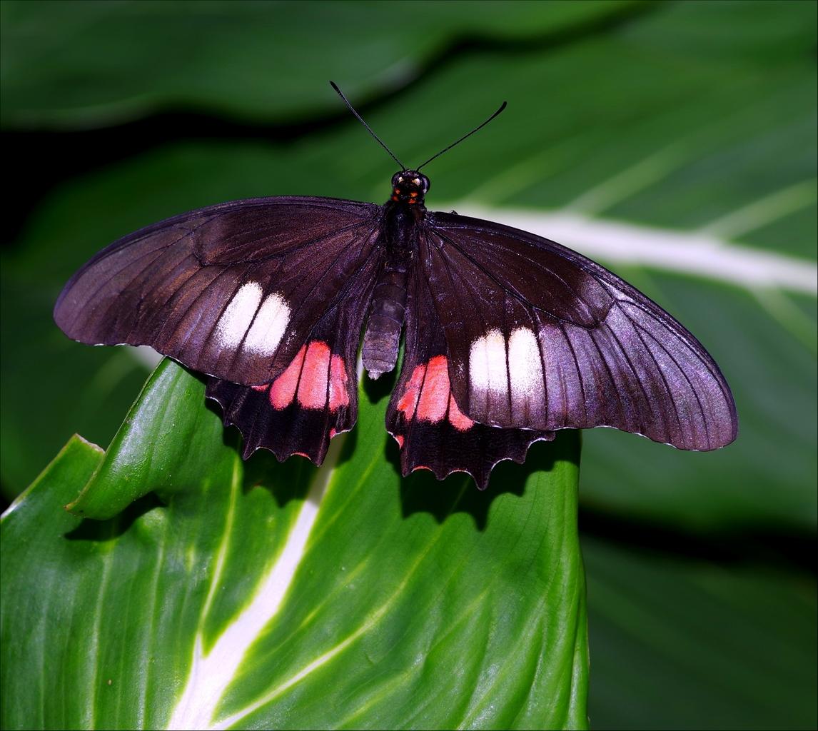 Papillons en Fêtes 2018 YPpTqg