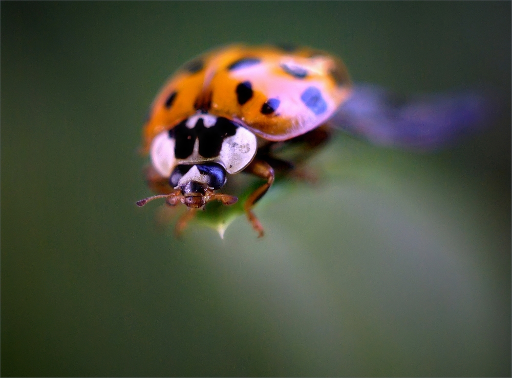 Macros/  proxi/  insectes  - Page 4 WWdirh
