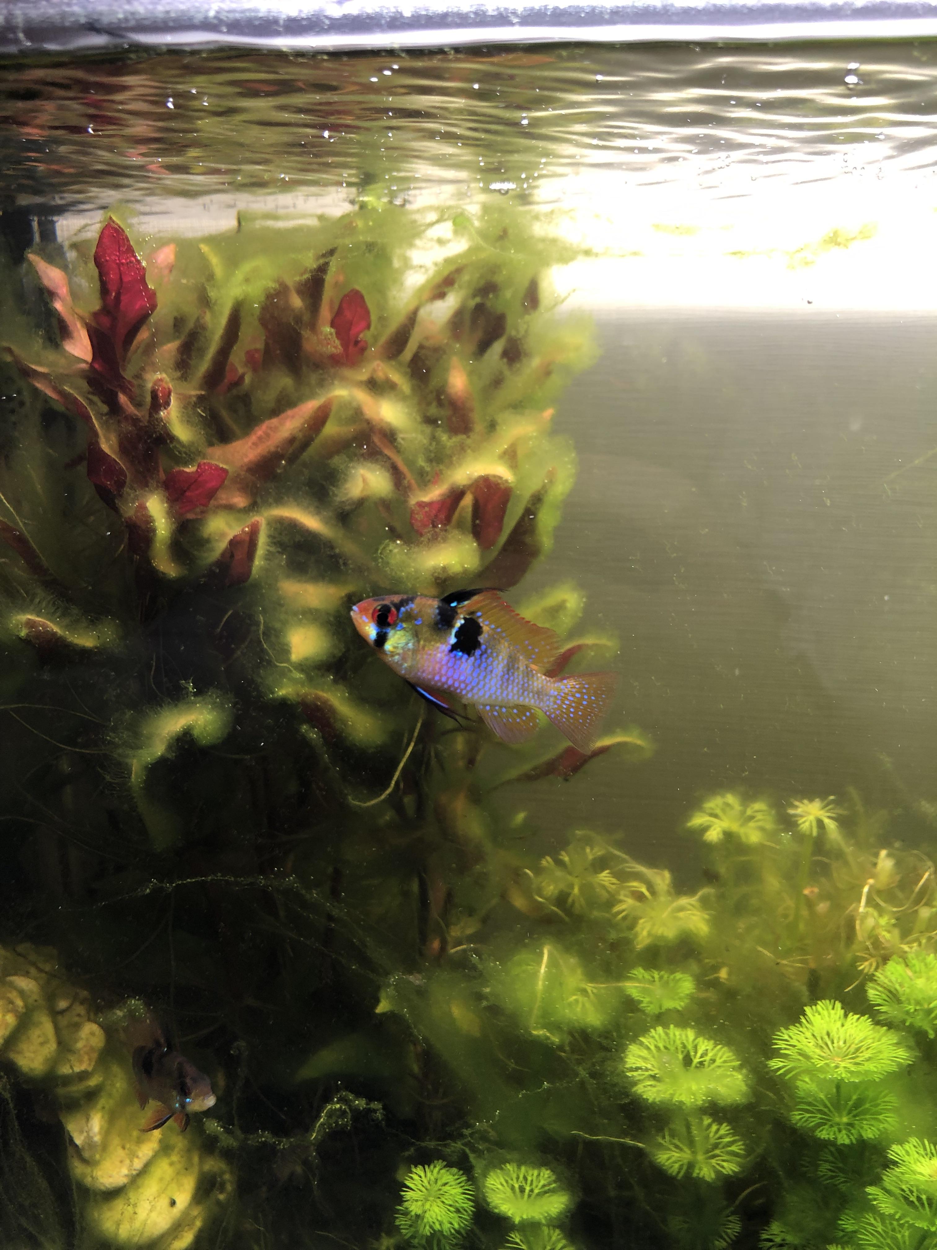 Problème d'algues CwtWxl