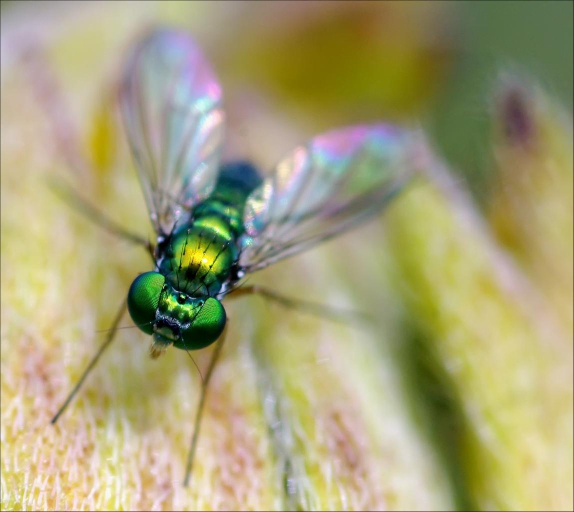 Macros/  proxi/  insectes  - Page 4 JlKAxo