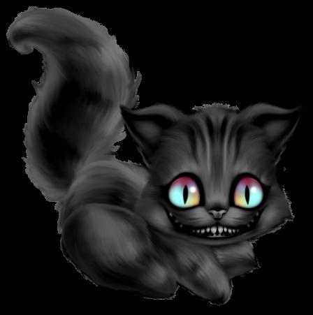 Gato Negro NK4c4M