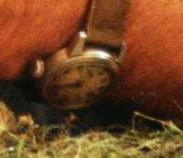 Alan Grant's Wristwatch In JP1 Xm1B54