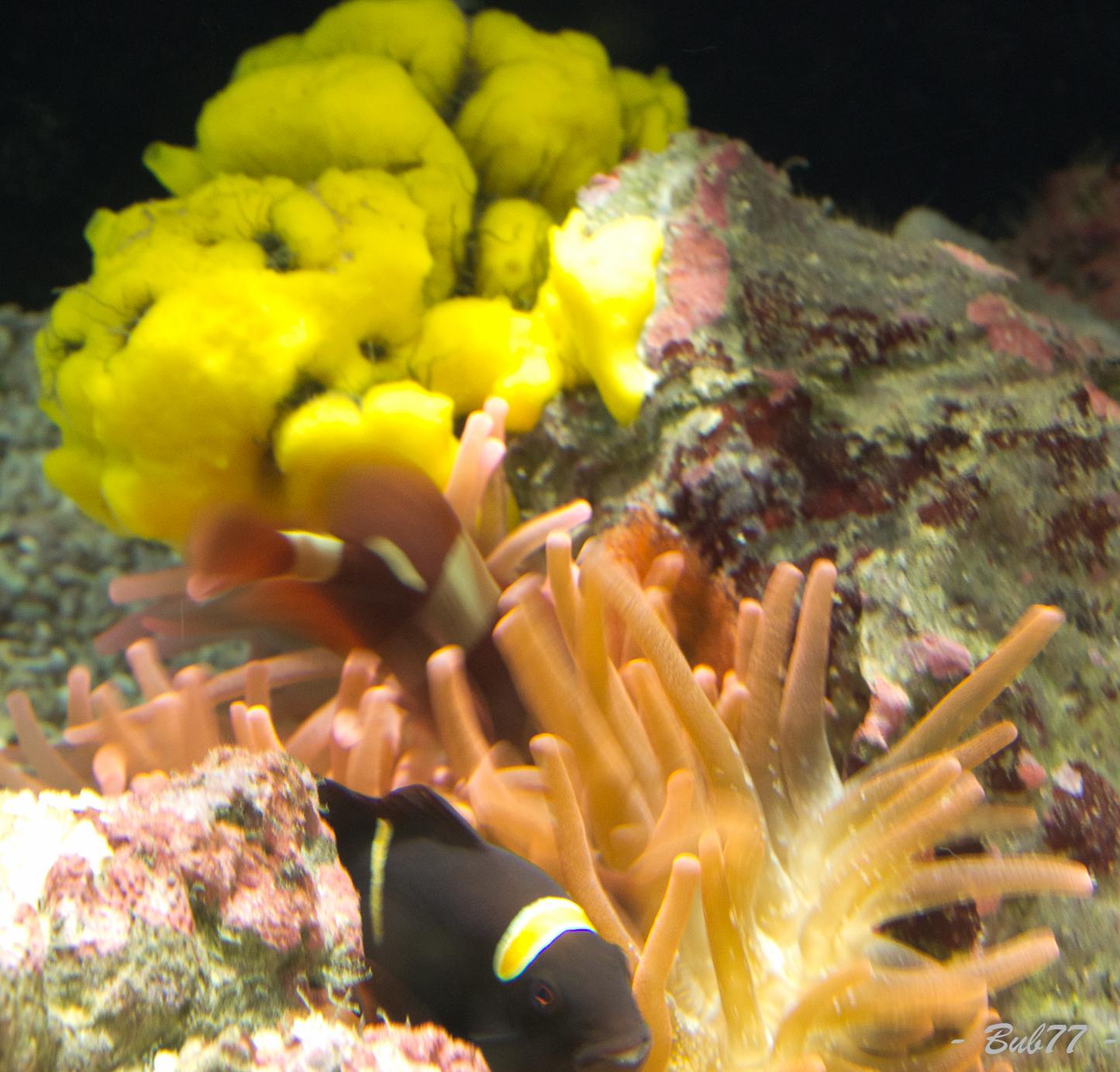 Aquarium de Monaco Imgp807535