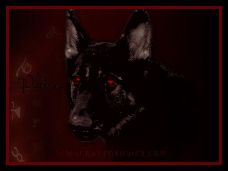Pandora, Hellhound / Hound 3111482e40927c8m3