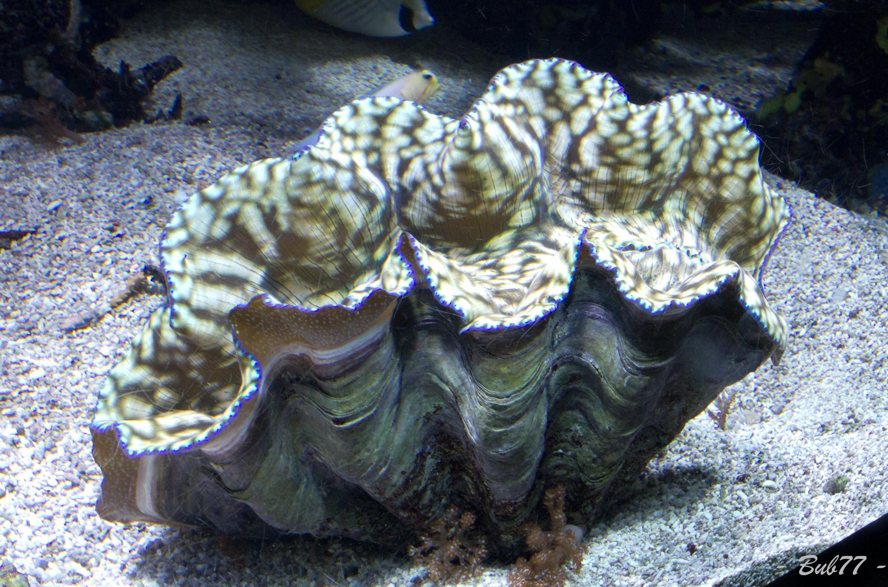 Aquarium de Monaco Imgp808847