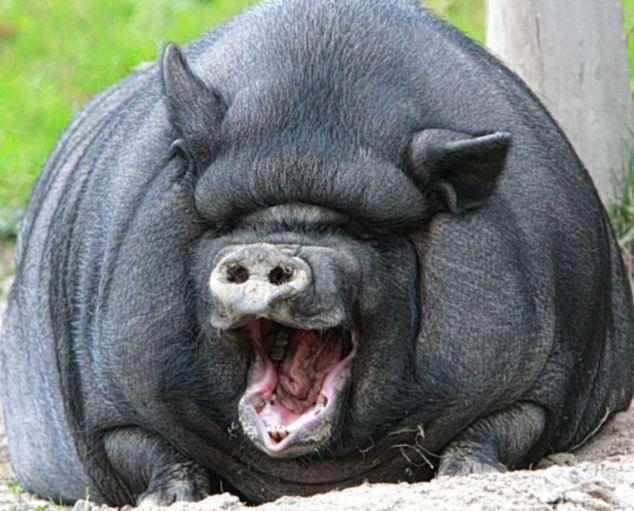 Các kiểu cười của ... động vật Images5665802