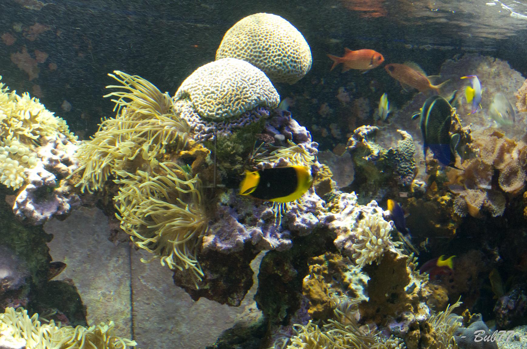Aquarium de Monaco Imgp810353