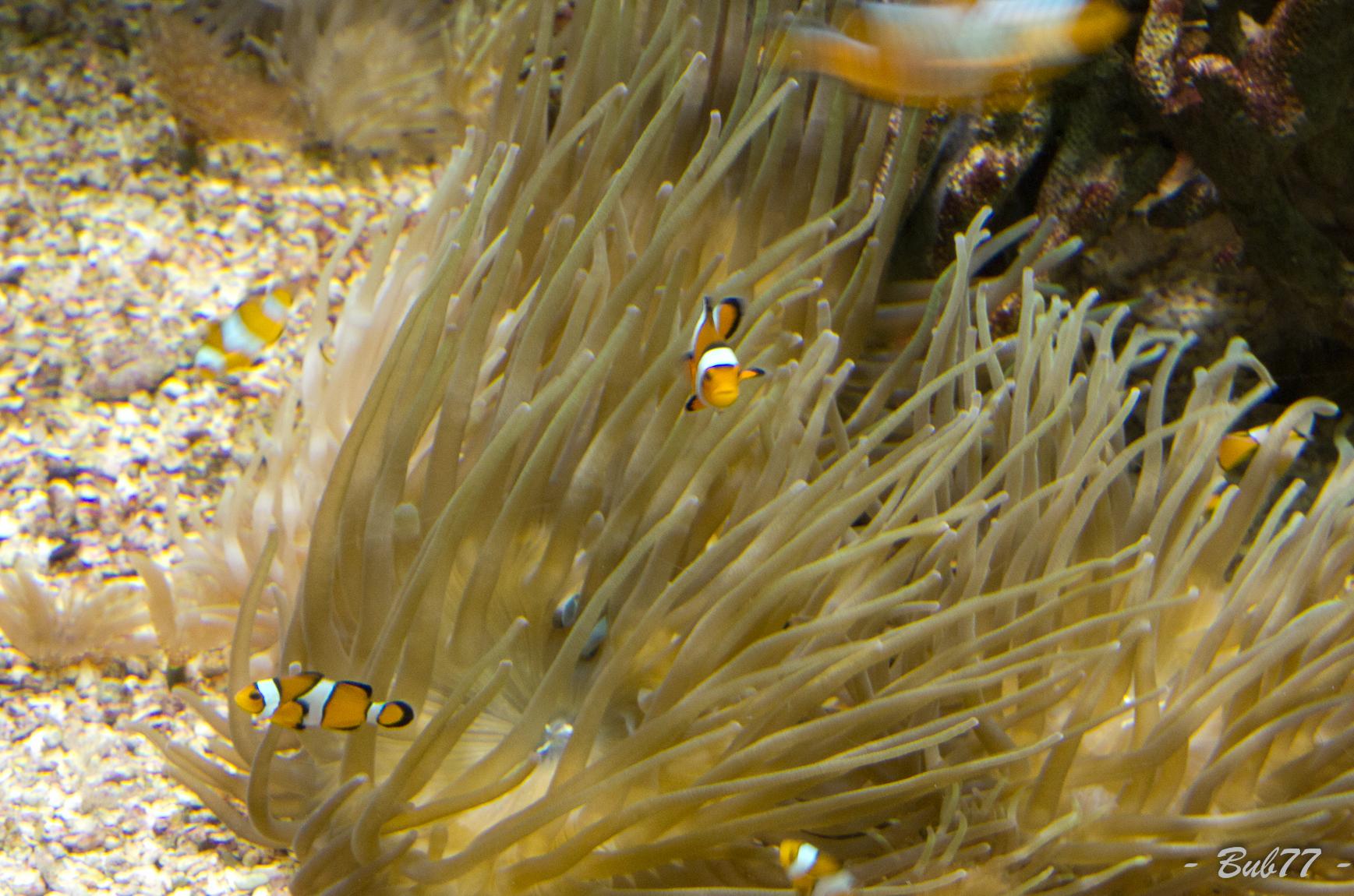 Aquarium de Monaco Imgp807737