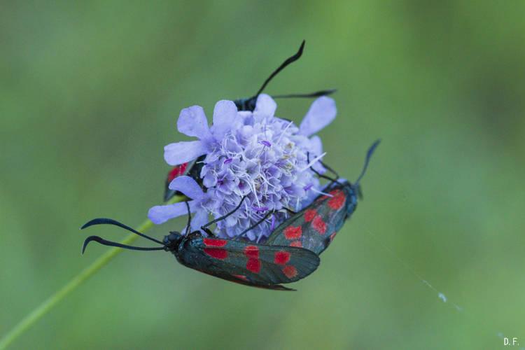 Insectes (bis) ou l'habitat collectif 67cv