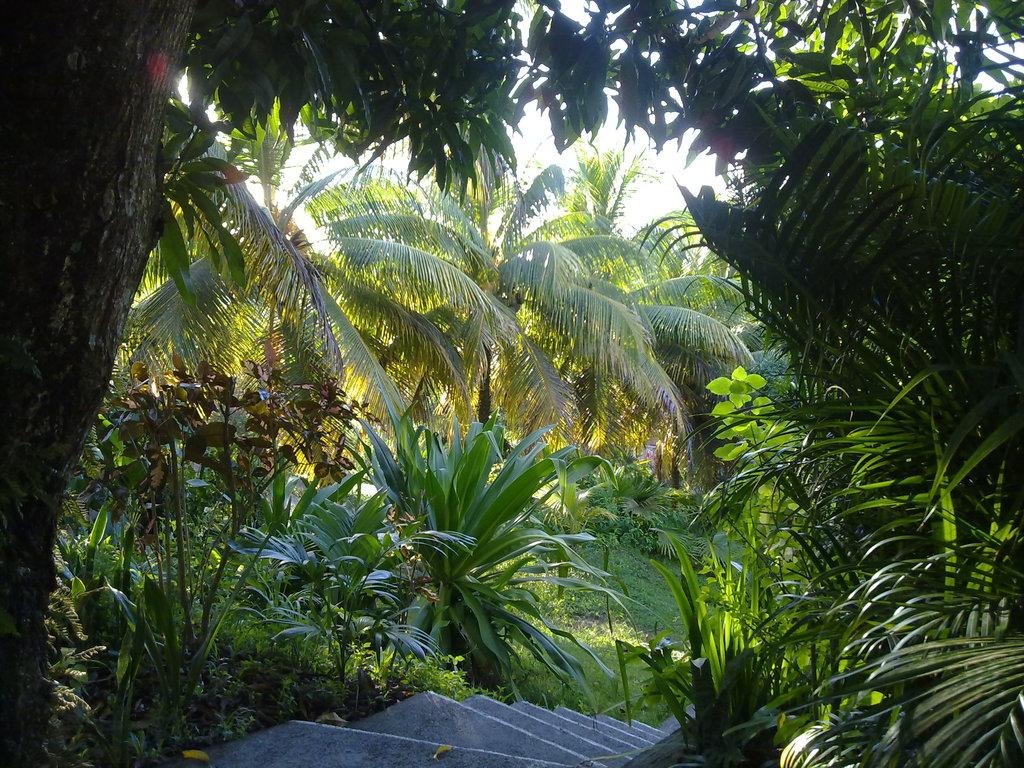 De retour de Guadeloupe, j'ai vu plein de belles choses, même des montres... 09112010721